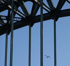 Un:Caged (Bazzography! {AWAY}) Tags: tyneside tyne rivertyne castiron bridge paleblue blue bluesky bird abird solitarybird flyingfree uncaged free freedom verticals stromgverticals iron newcastle bazmatthews