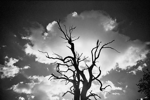 #79 monochrome spooky