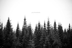 In the Treetops (jalexander.) Tags: tree silhouette island pond vermont fir remote northern treetop jalexander