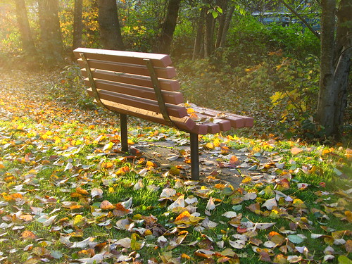 park bench in autumn glow