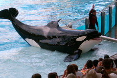Shamu at Seaworld (Abi Skipp) Tags: orlando florida whale orca seaworld shamu