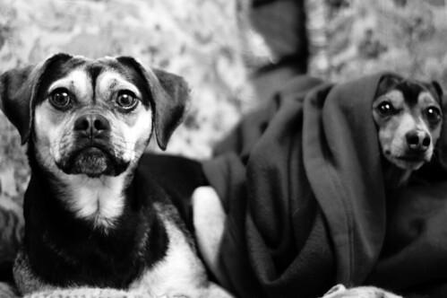 018- Puppies