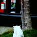Terrie White Photo 14