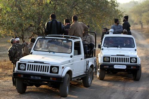 Low 2009-11-29 Sasan Gir - 01 Safari 01