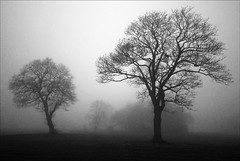 3.25. (Chrisconphoto) Tags: trees mist cold fog sthelens sherdleypark