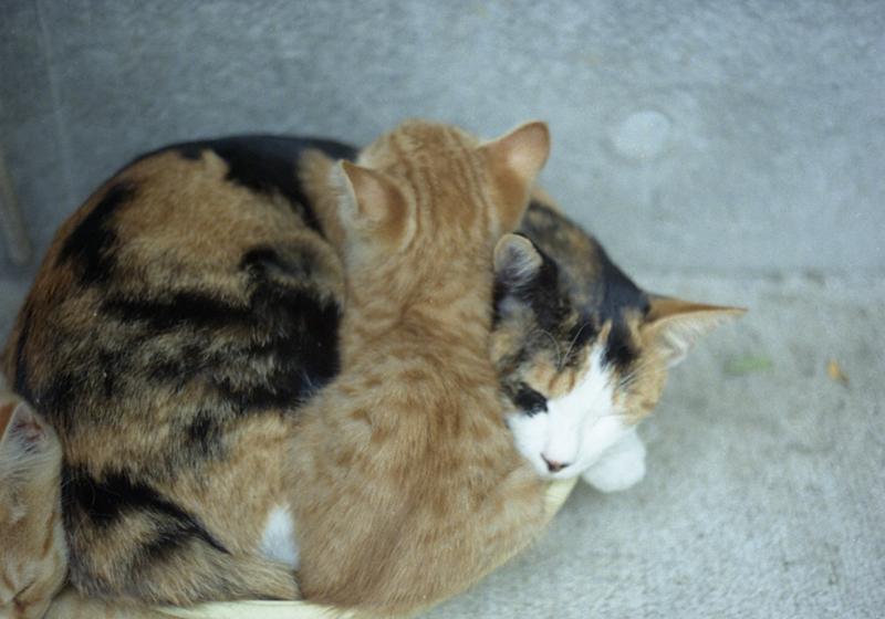 龍谷寺の猫