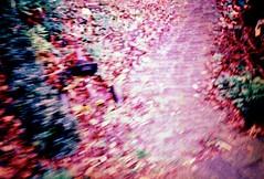Una visione confusa ma di colore precisa riappare (ale2000) Tags: pink blur leaves geotagged blurry xpro purple crossprocess cosina rosa outoffocus vision unfocused agfa cx2 triciclo mosso ctprecisa blurriness sfuocato visione aledigangicom geo:lat=5245665 geo:lon=4807133