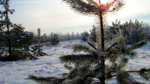 Pušaitės džiaugiasi žiema