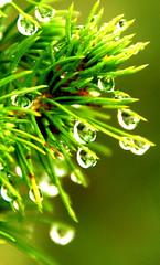 The falling beauties (Sukesh Kumar) Tags: drops waterdrops magicalbeauty