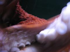 Tentacle cloud. (BoopBoopBoopBoop) Tags: baltimore octopus nationalaquarium tentacles