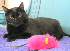 164-October'09 (Silvia Inacio) Tags: cats cat blackcat gatos gata boneca