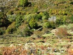 Sentier du ruisseau de San Petru : bergeries d'Arja Talesa