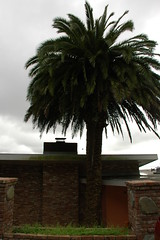 Brick flat top Palm (Robert Ogilvie) Tags: palm foundinsf gwsf treesontuesday