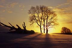starburst tree (Ron Layters) Tags: snow trees sunset bankhall chapelenlefrith winter lensflare starburst lateafternoonsun fields virginsnow cold yellow sky clouds bankhallfarm evening highpeak peakdistrict england derbyshire unitedkingdom slidefilmthenscanned slide transparency fujichrome velvia leica r6 leicar6 ronlayters geo:lat=53306935 geo:lon=1926652 geotagged highestpositioninexplore331onfridayfebruary262010 interesting explore explored