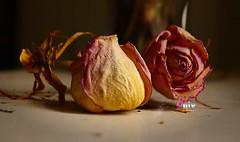 Flores secas (Nelson Jaramillo) Tags: naturaleza flores rosa blanca lilas rosadas