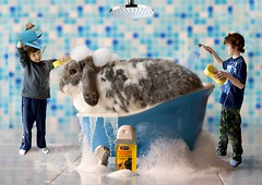 You Dirty Wabbit ! (Canonshot Mole) Tags: pet cute rabbit bunny kids fun bathroom soap furry bubbles dirty clean shampoo wash filthy elmerfudd lop wabbit dwarflop bathscene