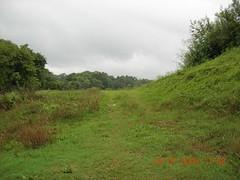 DSCN2981 (pingrajesh) Tags: nature forest hills madikeri