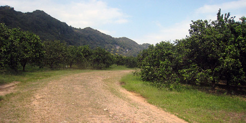 The Road through the Orange Grove