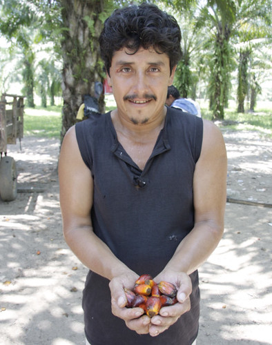 A member of the Aguan Valley Palm Producers Association holds the fruit from which palm oil is extracted. (Photo by TechnoServe.)