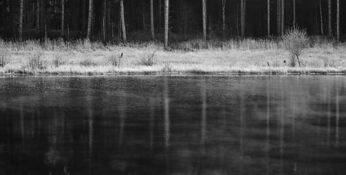 #04: Am Kiefernsee zeigte sich wieder leichter Nebel über dem Wasser. Die geraden Linien der Kiefern setzen sich in der Spiegelung fort.