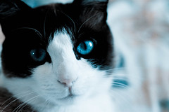 Toska (Ghassen Menaouar) Tags: portrait animals cat 50mm chat toska ghassen menaouar