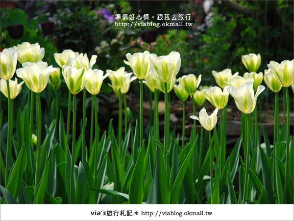 【梅峰農場】不止桃花美!梅峰農場賞花趣~(下)21