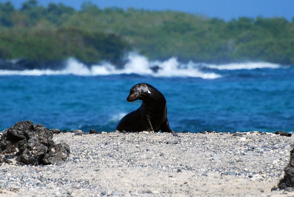 Galapagos Islands-689