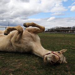 (Markus Hill) Tags: horse canon wideangle pasture pferd 2010 frhling quarterhorse koppel