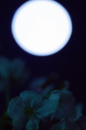 弥生満月 : 桜も入れ込んでと思ったが。