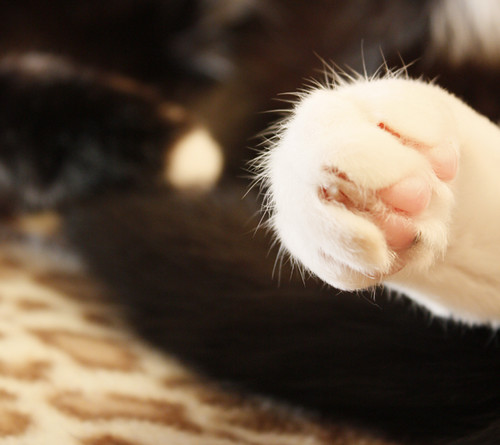 Fuzzy foot<3