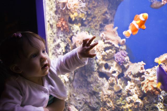 Lily found Nemo