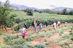 Bolivia: Vitivinícolas piden duras sanciones contra adulteración y contrabando