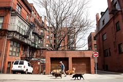 Boston (Gorka Bravo Photo) Tags: usa dog dogs boston bravo walk perros gorka massachussets txakurrak