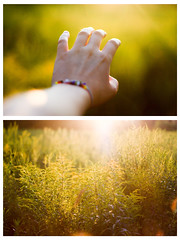 Collage (Cassie D.) Tags: canon 50mm f18 18 summer collage hand dof light golden hour canonxsi goldenhour magichour