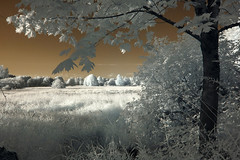 Meadow in IR (mstoy) Tags: trees usa grass ir unitedstatesofamerica meadow infrared wa clearview