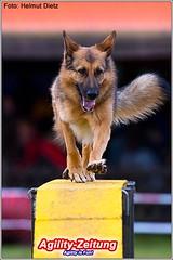 Agility - German Shepherd - Deutscher Schäferhund