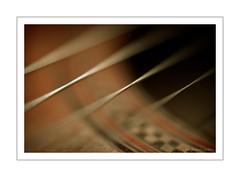cuerdas (Jon Gabaon Photography) Tags: macro bokeh string 5018 cuerdas dcr250 raynox garbongbisaya
