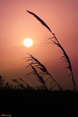 enchanted! (M@@nʎ) Tags: sunset sun beach silhouette iran pentax dreams hopes mazandaran ایران rumi غروب مازندران k100d مولانا خورشید mewlana ضدنور moulavi مولوی فریدونکنار شیدایی