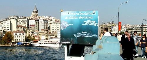 Marmara Denizinde avlanabilen balık türleri