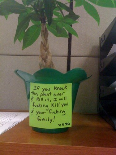 If you know this plant over and kill it, I will fucking kill you & your fucking family! xoxo