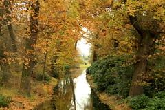 autumn IV
