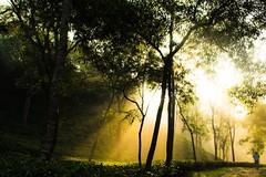 Alo ashbe e... (Shad0w_0f_Dark) Tags: art tea naturalbeauty teagarden sylhet bangladesh srimongol ttlsafary