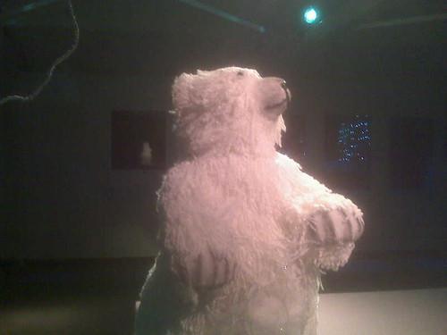 Enige echt polarbeer