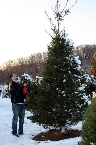 christmas tree-2-3