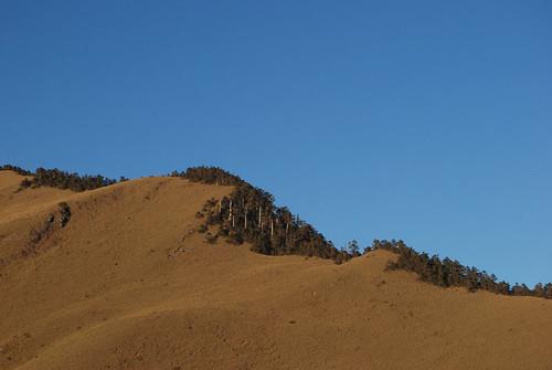 夜半衝合歡山20091205-87