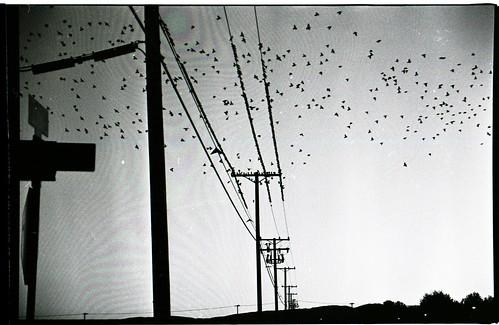 IMAGE: http://farm3.static.flickr.com/2715/4211442075_b7c4300752.jpg