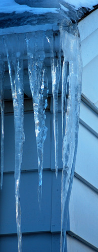 neighbor icicle