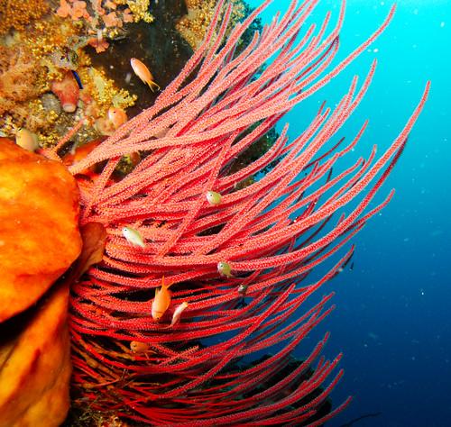 Bunaken Underwater 11