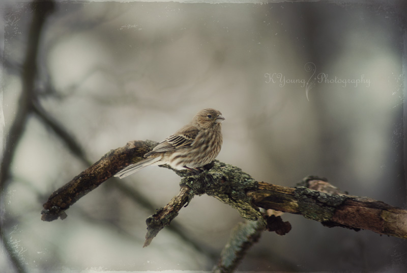 Sparrow in twlight