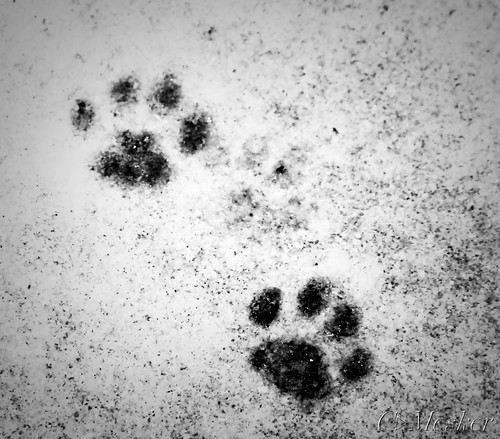 Kitteh Prints - 40/365